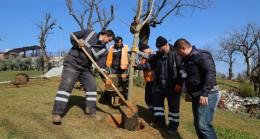 Çekmeköy Belediyesi Kent Parkı fidanlarla donatıyor
