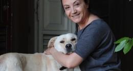 Beykoz'da köpek kaçırılma metodu