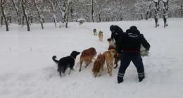 Çekmeköy Belediyesi, sokak hayvanlarını sürekli besliyor