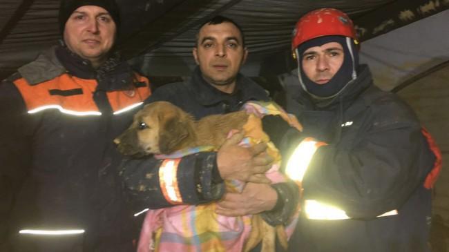 Kuyudaki köpek kurtarıldı