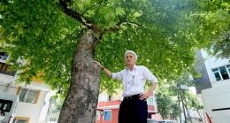 Diktiği çınar ağaçlarından ayrılsa özlüyor!