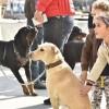 Üsküdar Dükkan, hayvan festivali düzenledi