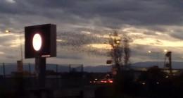 Günbatımında kuşların toplu şovu