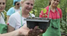 İSMEK'ten 'Beykoz Belediyesi Meyve Bahçesi'ne 65 yıllık domates fidesi