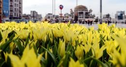 Taksim Meydanı lalelerle buluştu