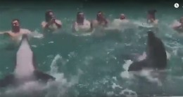 Yunus Balıkları tulumla horon oynuyor!