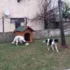 Ümraniye Belediyesi sokak hayvanlarını unutmuyor