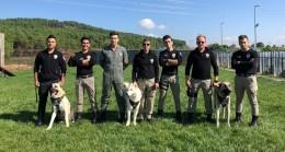 İstanbul Emniyet Müdürlüğü'nden zorlu köpek eğitimleri