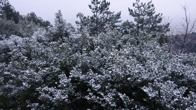 Aydos Ormanları karla buluştu
