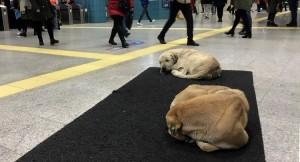 Soğuk havadan etkilenen köpekler Marmaray istasyonuna sığındı