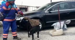 Üsküdarlı doğa dostu, köpeklere süpürge ile masaj yaptı