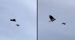 Karga havada droneye saldırdı