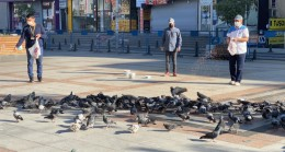 PTT çalışanları kuş ve kedileri unutmadı