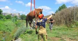 Dereye düşen at ve yavrusu kurtarıldı