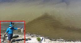 Küçükçekmece Gölü'nde oluşan pislik ve oksijen yetersizliği balıkları öldürüyor!