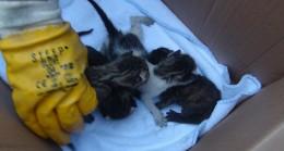 Taksim Meydanı'nda kedi yavrularını kurtarmak için seferber oldular