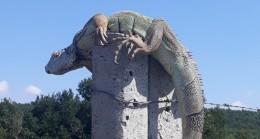 Çatalca'da dev iguana bulundu