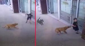 Sokak köpeği çocuğa saldırdı
