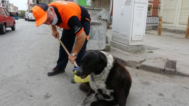 Pendik Belediyesi temizlik elemanı süpürgesiyle sokak köpeğine masaj yaptı