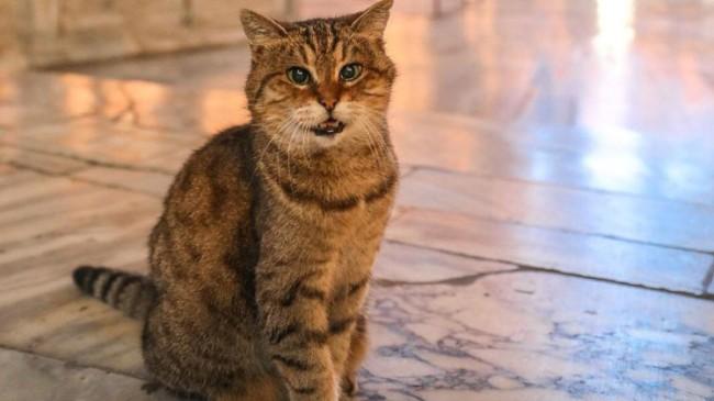 Ayasofya Camii'nin Gli isimli kedisi öldü