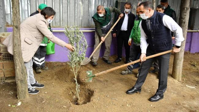 """Başkan Yıldız, """"Zeytin ağacı bilgeliği ve arınmayı ifade eder, bolluk ve berekettir"""""""