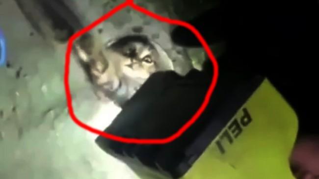 Kedi borunun içinde mahsur kaldı