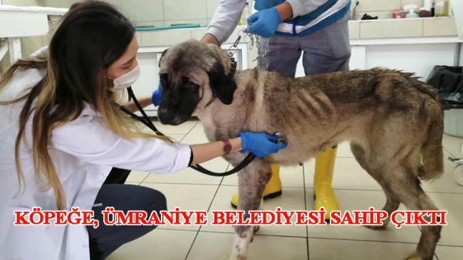 Köpek, insafsız sahibi tarafından yaşlı olduğu için terk edildi
