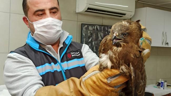 Ümraniye Belediyesi yaralı doğanı tedavi altına aldı