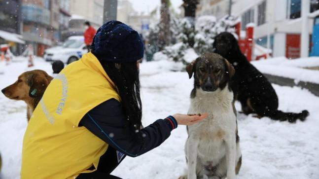 Çekmeköy Belediyesi sokak hayvanları için seferber oldu