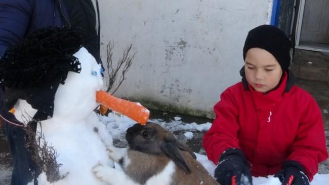 Tavşan kardan adamın burnunu yedi!
