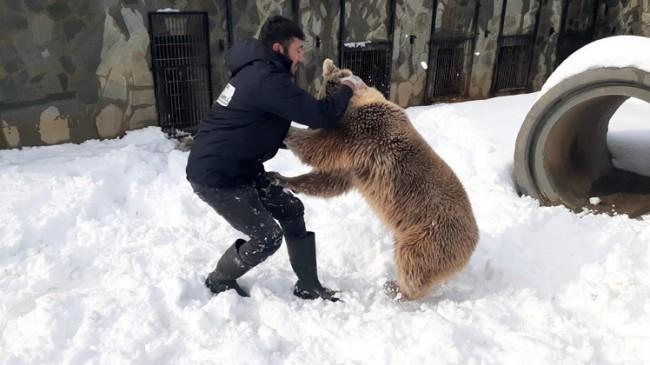 Ayının canı karda güreşmek istedi