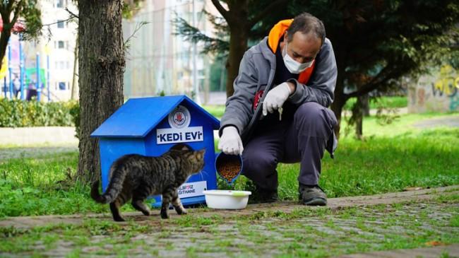 Kağıthane Belediyesi'nden sokak hayvanları için yeni bir dizi proje