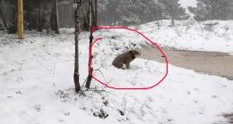 Kar yağışı en çok onları etkiliyor