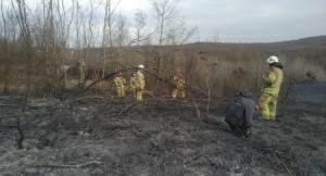 Magandalar ormanlık alanı yaktı