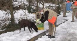 Üsküdar Belediyesi sokak hayvanları için harekete geçti