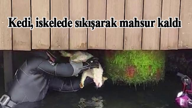 İskeleye sıkışan kediyi kurtardılar