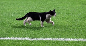 Kedi, sonradan oyuna girdi!