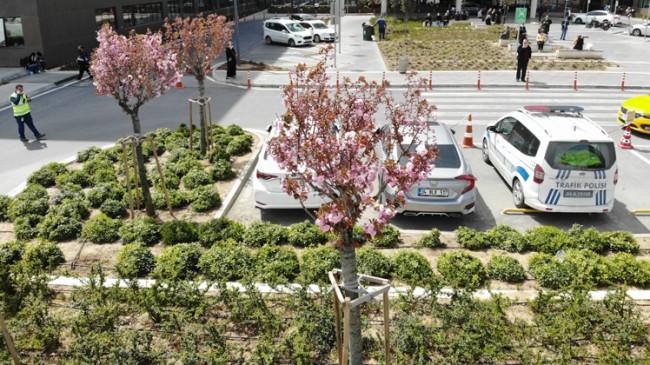 Şehir hastanesi bahçesinde sakura ve çam ağaçları çiçek açtı