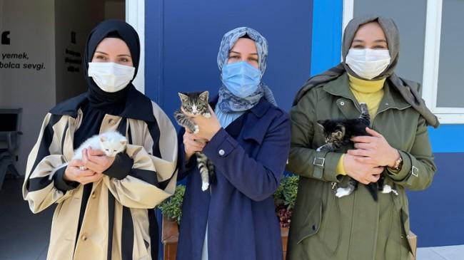 Sultanbeyli Belediyesi, minik dostları için farkındalık oluşturdu