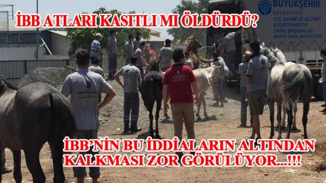 Atlarla ilgili katliam var iddiası..!!