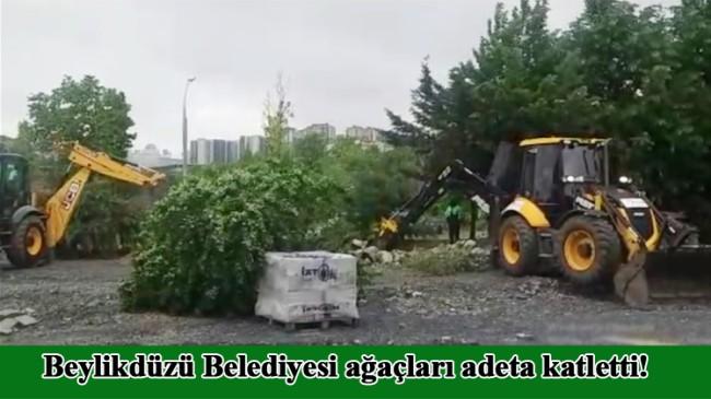 Beylikdüzü Belediyesi'nden ağaç katliamı