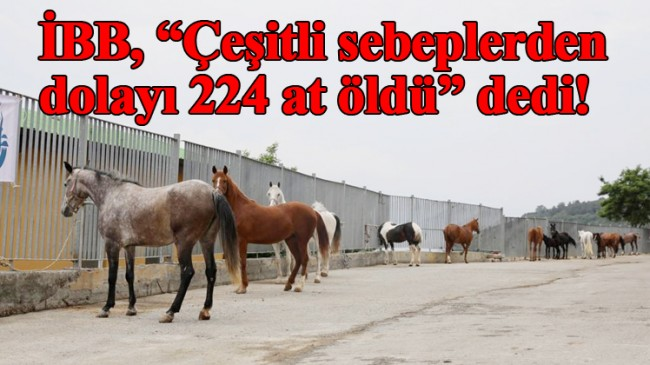 İBB atları ne yaptığını açıkladı!