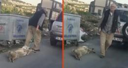 Köpeği iple boğazından bağlayıp sürükleyen şahıs serbest bırakıldı!