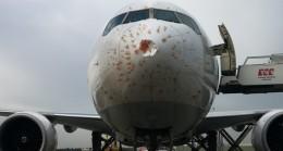 Uçak trafiğinde kuş ve yıldırım kazaları