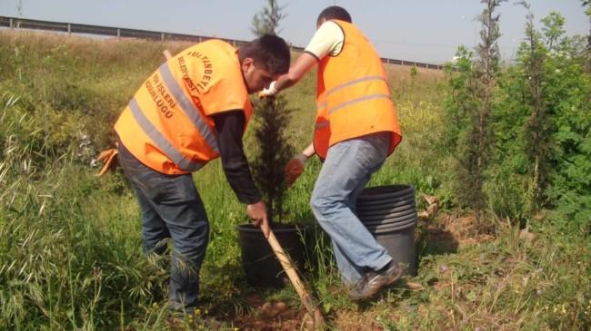 Keskin, İBB'nin Sultanbeyli'deki ağaç katliamına tepki gösterdi
