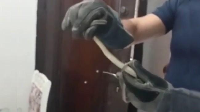 Avcılar'da bir evde yılan paniği