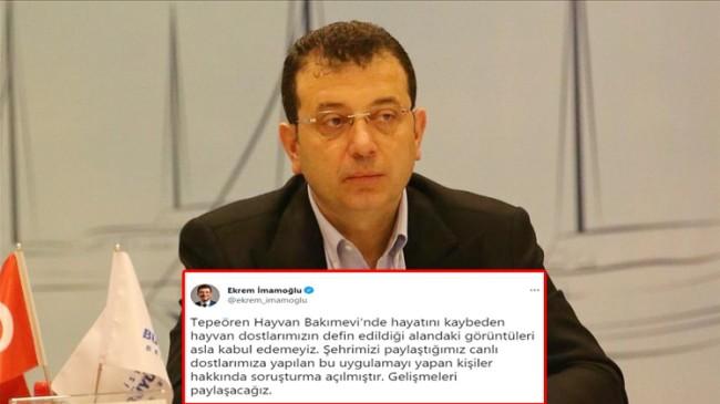 İBB Başkanı Ekrem İmamoğlu, katledilen köpeklerle ilgili açıklama yaptı