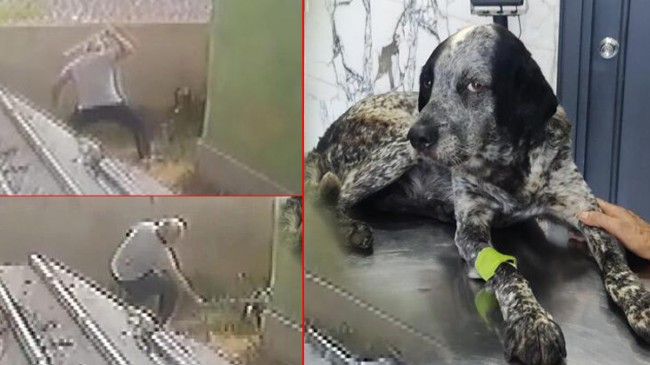 Olayların ilçesi Ataşehir'de köpeği döven adam hakkında karar verildi