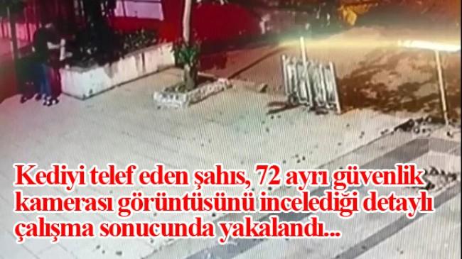 Üsküdar'da kediyi yerden yere vurarak öldüren cani yakalanarak tutuklandı