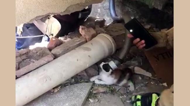 Yavru kediler, Beylikdüzü'nde bir sitenin yağmur suyu borusuna sıkıştı